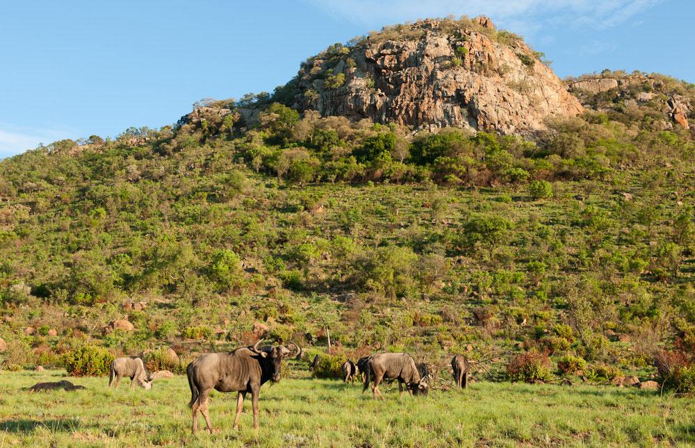 Pilanesberg_Game_Reserve_008